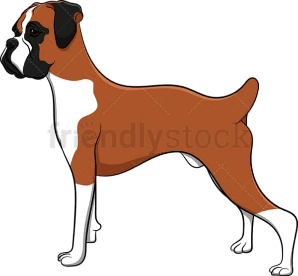 Proud boxer dog. PNG - JPG and vector EPS (infinitely scalable). Image isolated on transparent background.