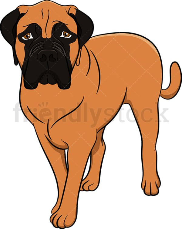 Tan bullmastiff dog. PNG - JPG and vector EPS (infinitely scalable). Image isolated on transparent background.