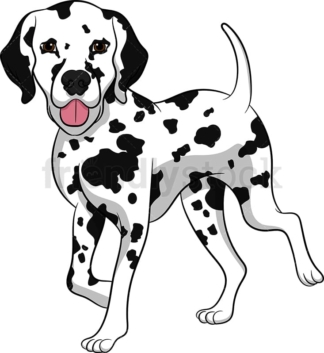 Walking dalmatian dog. PNG - JPG and vector EPS (infinitely scalable). Image isolated on transparent background.