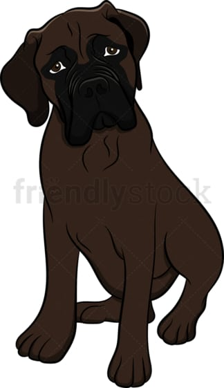 Curious bullmastiff dog. PNG - JPG and vector EPS (infinitely scalable). Image isolated on transparent background.