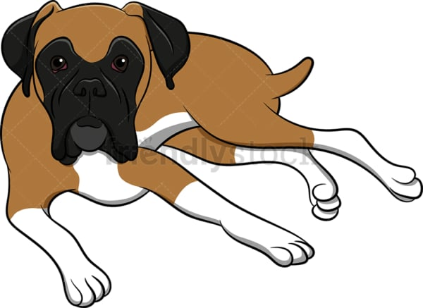 Boxer dog lying down. PNG - JPG and vector EPS (infinitely scalable). Image isolated on transparent background.