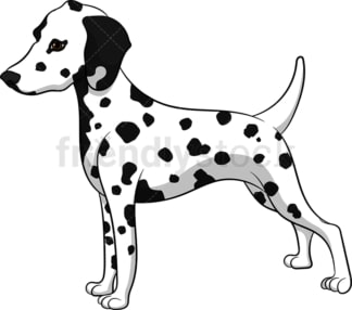 Proud dalmatian dog. PNG - JPG and vector EPS (infinitely scalable). Image isolated on transparent background.