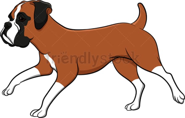 Running boxer dog. PNG - JPG and vector EPS (infinitely scalable). Image isolated on transparent background.