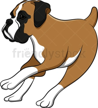 Boxer dog running and turning around. PNG - JPG and vector EPS (infinitely scalable). Image isolated on transparent background.