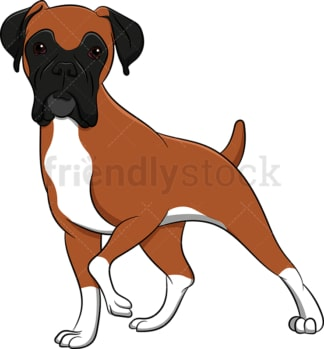 Alerted boxer dog. PNG - JPG and vector EPS (infinitely scalable). Image isolated on transparent background.