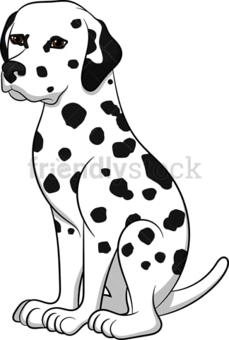 Attentive dalmatian dog. PNG - JPG and vector EPS (infinitely scalable). Image isolated on transparent background.