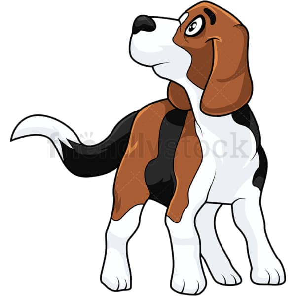 Cute beagle dog looking up. PNG - JPG and vector EPS (infinitely scalable).