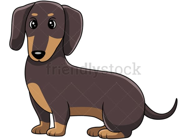 Cute dachshund sausage dog on all fours. PNG - JPG and vector EPS (infinitely scalable).