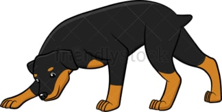 Curious rottweiler sniffing around. PNG - JPG and vector EPS (infinitely scalable).