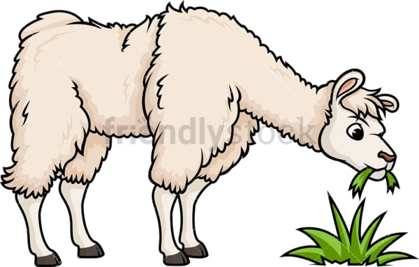 Llama eating grass. PNG - JPG and vector EPS (infinitely scalable).