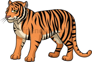 Wild bengal tiger. PNG - JPG and vector EPS (infinitely scalable).
