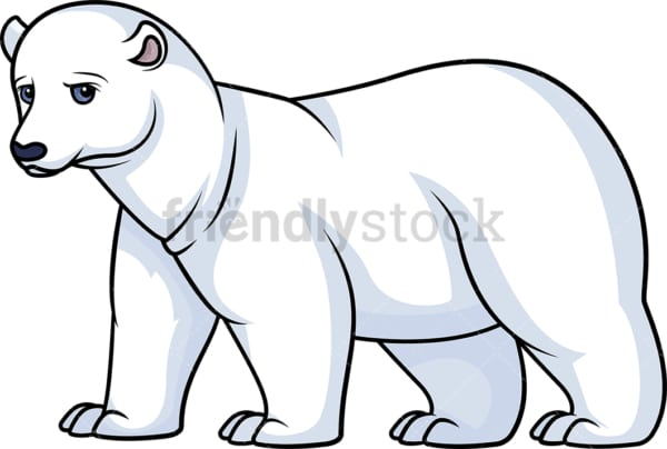 Wild polar bear. PNG - JPG and vector EPS (infinitely scalable).