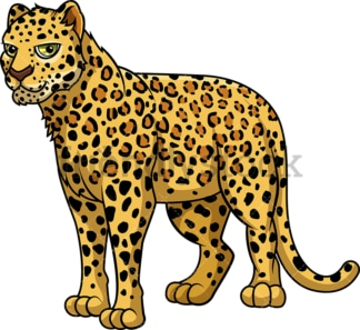 Wild leopard. PNG - JPG and vector EPS (infinitely scalable).