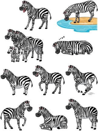 Wild zebras. PNG - JPG and vector EPS file formats (infinitely scalable).