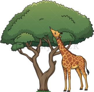 Giraffe eating leaves from tree. PNG - JPG and vector EPS (infinitely scalable).