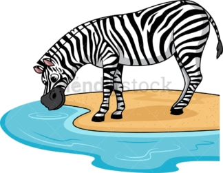 Zebra drinking water. PNG - JPG and vector EPS (infinitely scalable).