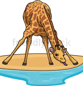 Giraffe drinking water from pond. PNG - JPG and vector EPS (infinitely scalable).