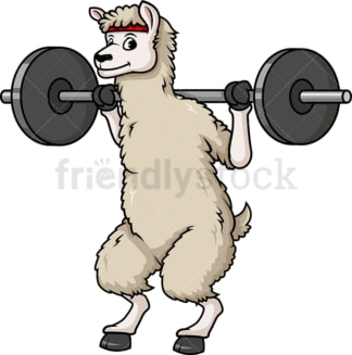 Llama doing squats with barbell. PNG - JPG and vector EPS (infinitely scalable).