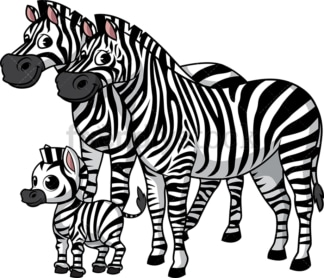 Zebra family. PNG - JPG and vector EPS (infinitely scalable).