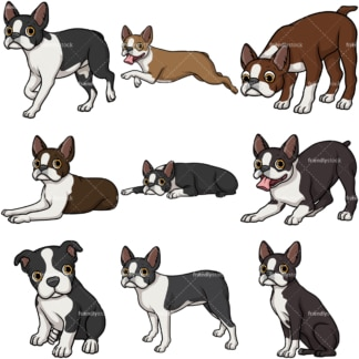 Boston terrier dogs. PNG - JPG and vector EPS file formats (infinitely scalable).