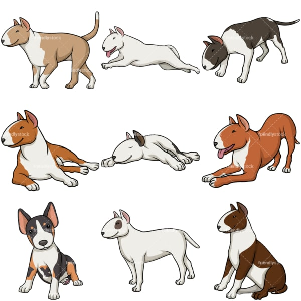 Bull terrier dogs. PNG - JPG and vector EPS file formats (infinitely scalable).