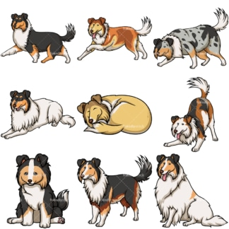 Collie dogs. PNG - JPG and vector EPS file formats (infinitely scalable).