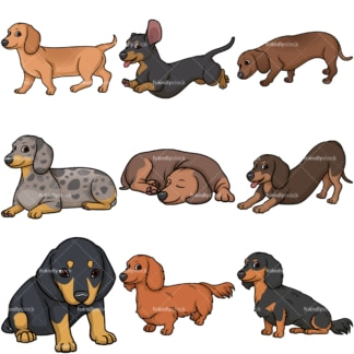 Dachshund dogs. PNG - JPG and vector EPS file formats (infinitely scalable).