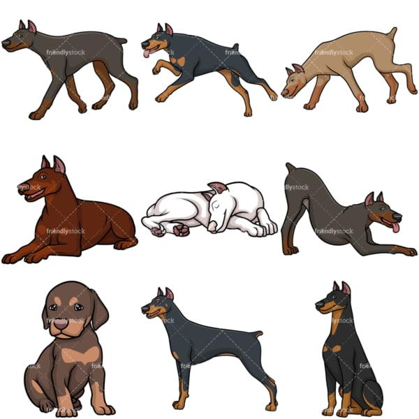 Doberman dogs. PNG - JPG and vector EPS file formats (infinitely scalable).