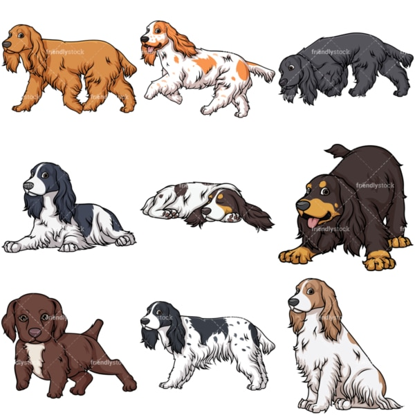 English cocker spaniel dogs. PNG - JPG and vector EPS file formats (infinitely scalable).