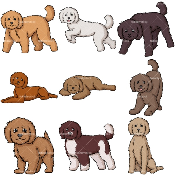 Labradoodle dogs. PNG - JPG and vector EPS file formats (infinitely scalable).