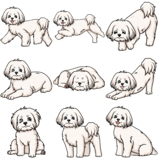 Maltese dogs. PNG - JPG and vector EPS file formats (infinitely scalable).