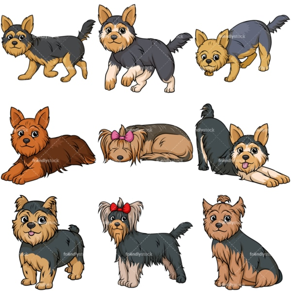 Yorkshire terrier dogs. PNG - JPG and vector EPS file formats (infinitely scalable).