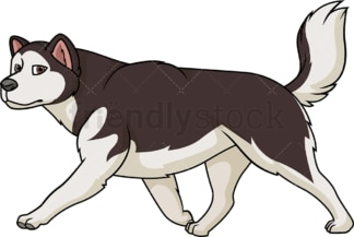 Alaskan malamute walking. PNG - JPG and vector EPS (infinitely scalable).