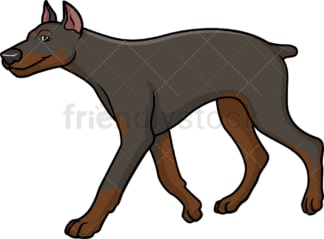 Doberman walking. PNG - JPG and vector EPS (infinitely scalable).