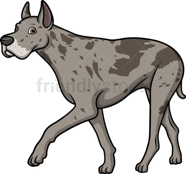 Great dane walking. PNG - JPG and vector EPS (infinitely scalable).