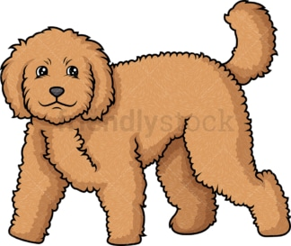 Labradoodle walking. PNG - JPG and vector EPS (infinitely scalable).