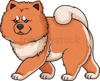 Red chow chow walking. PNG - JPG and vector EPS (infinitely scalable).