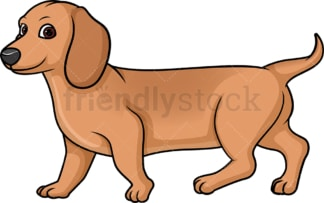 Red dachshund walking. PNG - JPG and vector EPS (infinitely scalable).