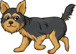 Yorkshire terrier walking. PNG - JPG and vector EPS (infinitely scalable).
