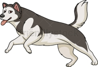 Alaskan malamute running. PNG - JPG and vector EPS (infinitely scalable).