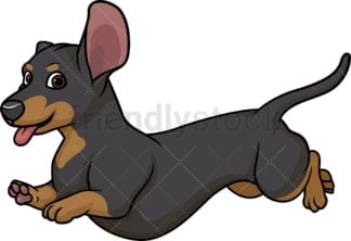 Black tan dachshund running. PNG - JPG and vector EPS (infinitely scalable).