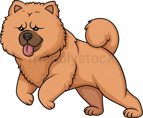 Chow Chow running. PNG - JPG and vector EPS (infinitely scalable).