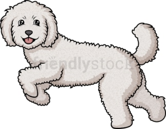 Labradoodle running. PNG - JPG and vector EPS (infinitely scalable).