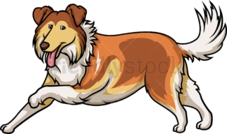 Mahogany sable collie running. PNG - JPG and vector EPS (infinitely scalable).
