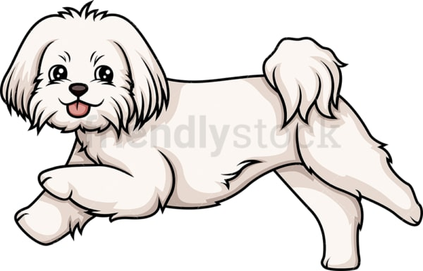 Maltese running. PNG - JPG and vector EPS (infinitely scalable).