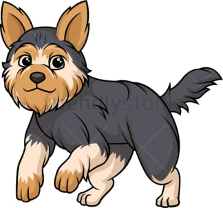 Yorkshire terrier running. PNG - JPG and vector EPS (infinitely scalable).