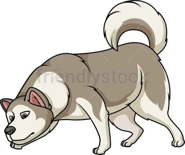 Alaskan malamute sniffing. PNG - JPG and vector EPS (infinitely scalable).