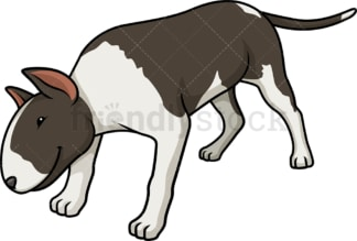Black brindle bull terrier sniffing. PNG - JPG and vector EPS (infinitely scalable).