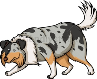 Blue merle collie sniffing. PNG - JPG and vector EPS (infinitely scalable).