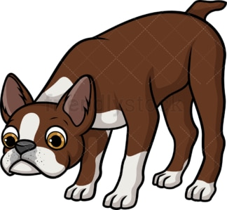 Brown boston terrier sniffing. PNG - JPG and vector EPS (infinitely scalable).